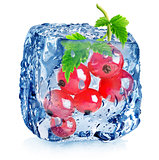 Red berries of currant in ice
