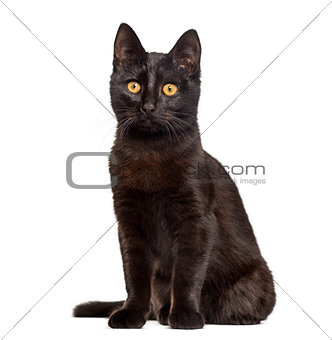 Black cat sitting in front of a white background