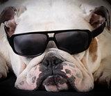 cool hound