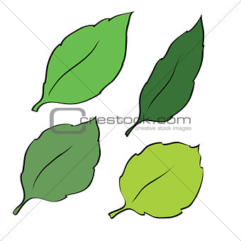 Four leaves isolated on white background