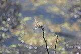 Dragonfly #4