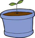 Seedling Growing in Pot