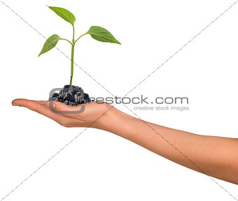 Small plant in womans hand
