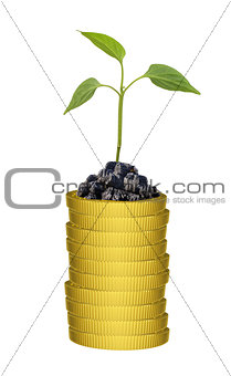 Green plant on gold coins stack