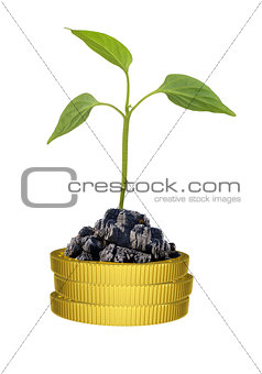 Green plant on gold coins pile