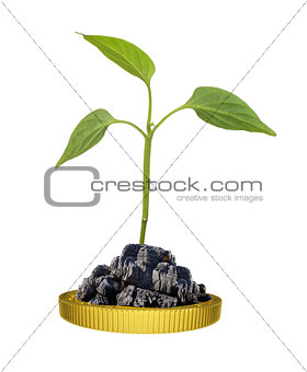 Green plant on gold coin