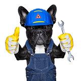 handyman  dog