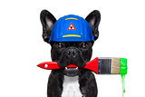 handyman painter   dog
