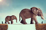 mother and baby elephant on a tightrope