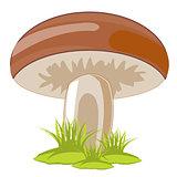 Mushroom in herb