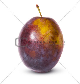 Single violet plum