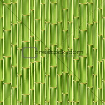 Green bamboo seamless texture
