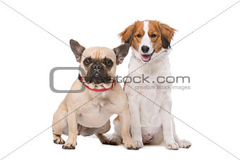 French Bulldog and a Kooiker Dog