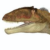 Carcharodontosaurus Head
