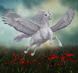 Pegasus and Red Poppies