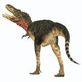 Tarbosaurus Dinosaur Tail