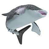 Whale Shark Body