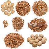 Collection of nuts and empty nutshells