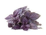 Fresh garden herbs. Purple basil