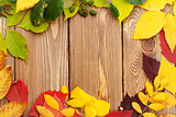 Autumn leaves over wood background with copy space