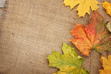 Autumn maple leaves over burlap texture background