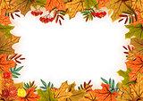 Autumn leaves, rowan and flowers. Template frame