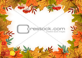 Autumn leaves, rowan and flowers. Template frame