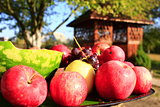 red apples on the arbor background