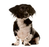 Crossbreed dog sitting in front of a white background