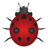 Red Ladybug Color Illustration