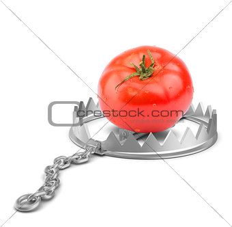 Tomato in bear trap