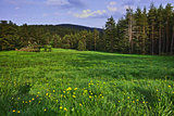Green Forest Landscape in Rhodopes Mountain