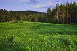 Green Forest Landscape in Rhodopes Mountain