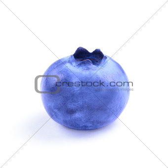 Single Fresh Blueberry Isolated on the White Background