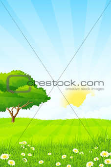 Green Grass with Tree