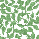 seamless background. leaves Monstera with outline
