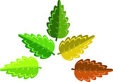 leaf changes color with the seasons