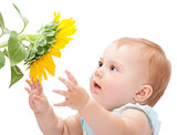 Cute baby with sunflower