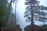 Fantasy foggy forest