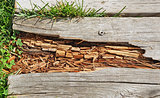 Rotting wood on boardwalk path in need of repair