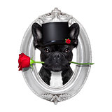 rose valentines dog