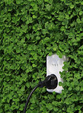 electric power receptacle on a green grass wall