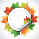 Stickers with colorful maple leaves on white background.