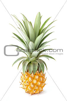 Close up pineapple isolated on white