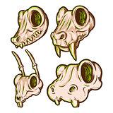 Animal Skull Set