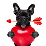 valentines arrow dog