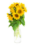 bouquet of bright sunflowers