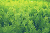 Shrubs fern Background
