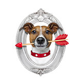valentines arrow dog in frame
