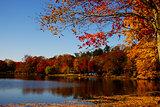 Lake Topanemus foliage